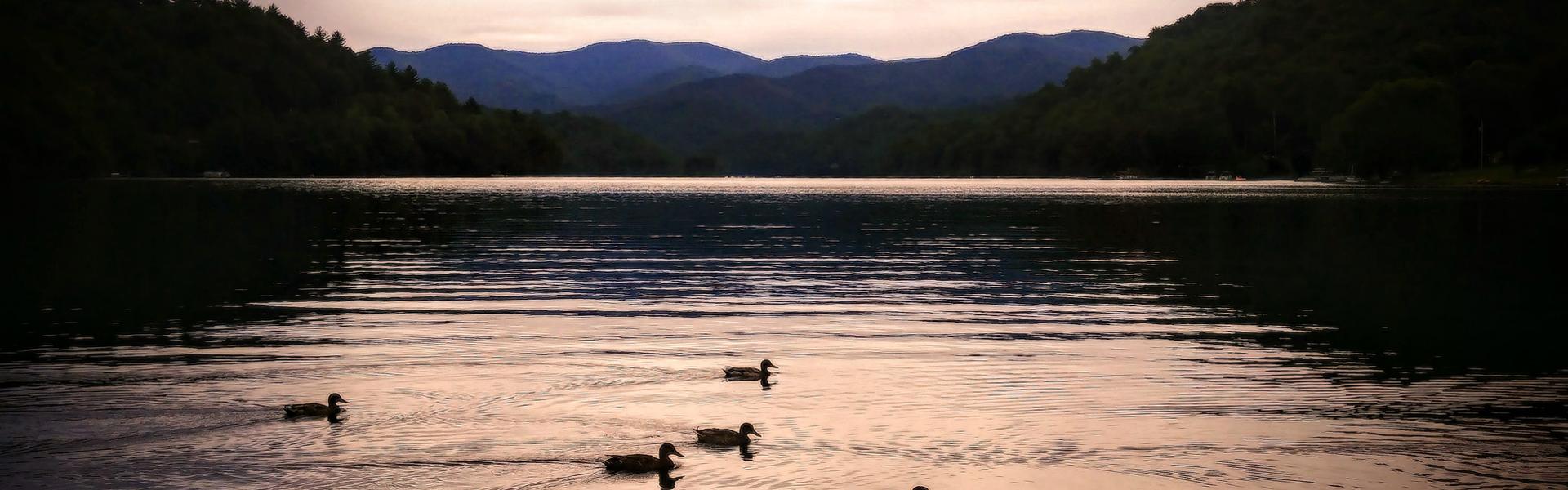 Mtn Lake Ducks